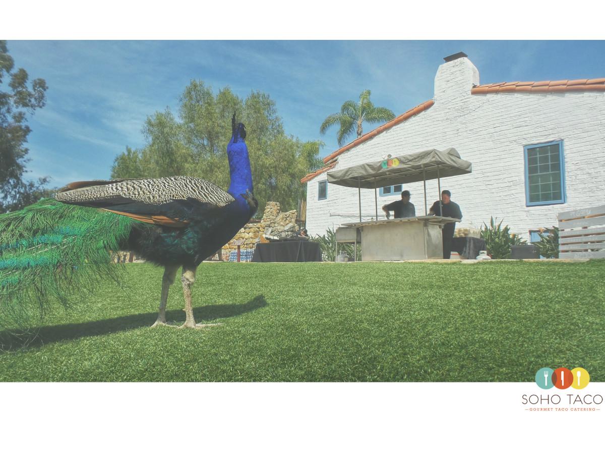 SOHO TACO Gourmet Taco Catering - Leo Carillo Ranch Historic Park - Carlsbad CA - Wedding