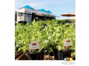 SOHO TACO Gourmet Taco Truck - Rogers Gardens - Orange County - OC